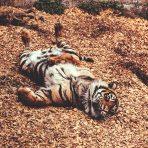 animal-animal-photography-big-1551437